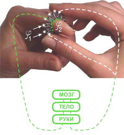 http://www.massagespb.ru/images/product/kol_meh2.jpg